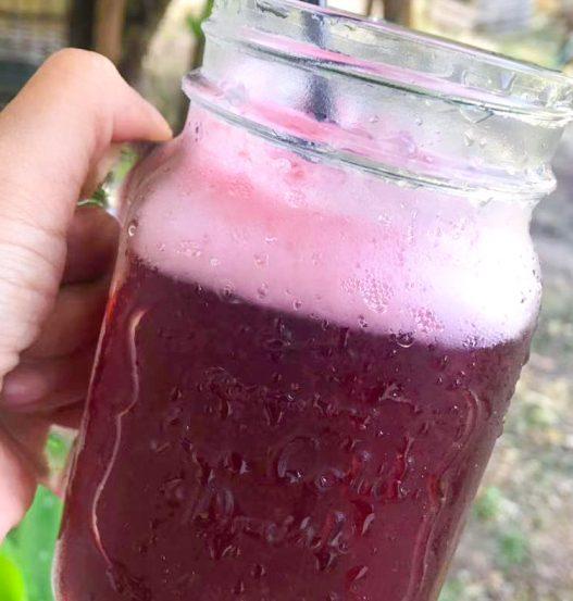 Homemade Ribena Roselle Syrup Sorrel